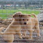 어미개 덕분에 흙더미 속에서 구조된 강아지들이 입양된