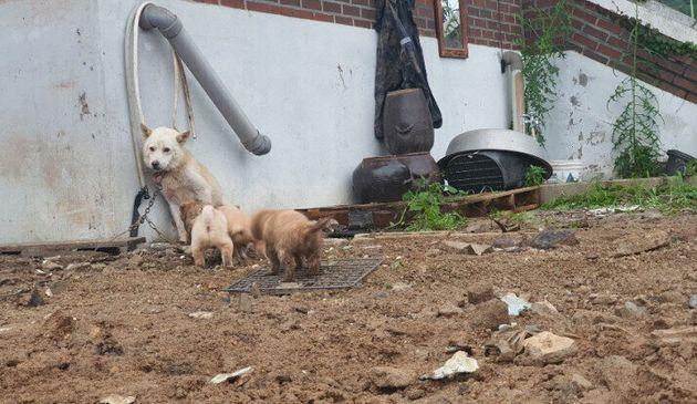 어미개 덕분에 흙더미 속에서 구조된 강아지들이 입양처를