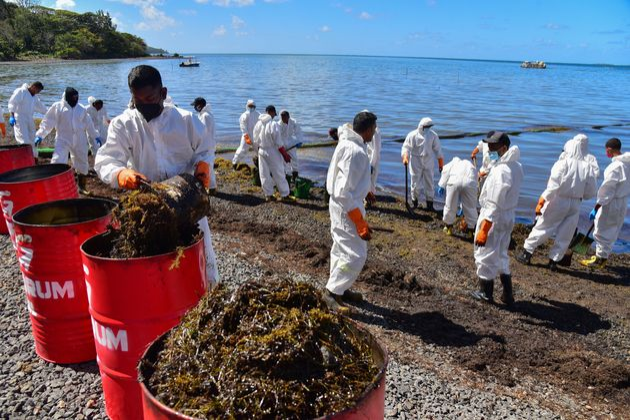 油まみれになった海藻も引き上げられた 8月13日撮影(Photo by BEEKASH ROOPUN/L'Express Maurice/AFP via Getty