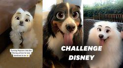 Le #dogdisneychallenge cartonne sur