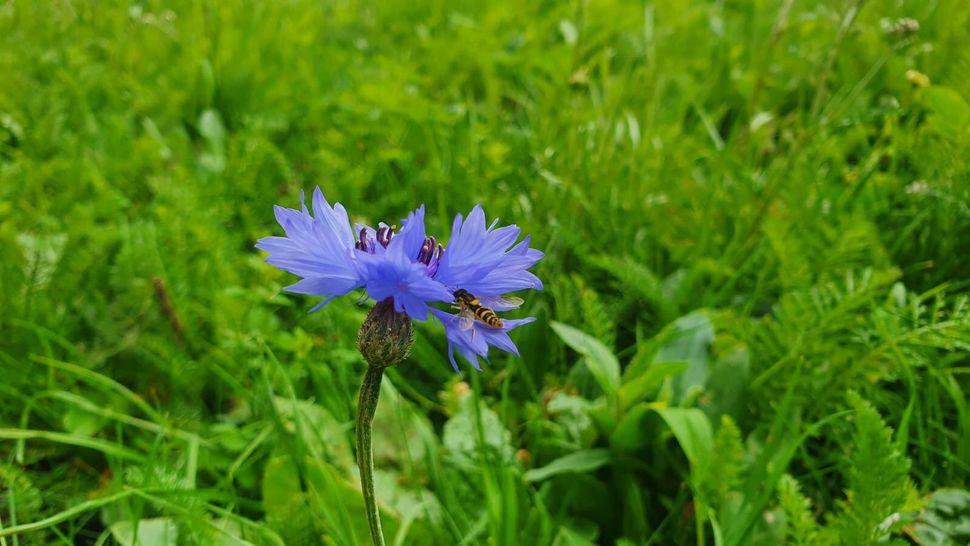Dublin Trinity College's wildflowers are already attracting pollinators
