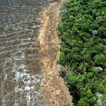 Repercussão da gestão ambiental faz Congresso tentar reverter imagem negativa do