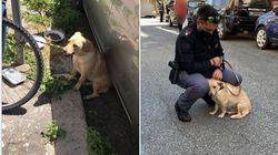 Il cane abbandonato sotto il sole è stato adottato dal poliziotto che lo ha