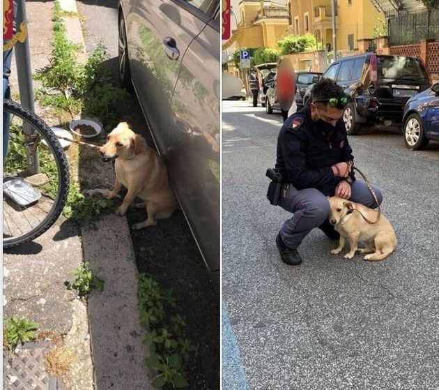 Il cane abbandonato sotto il sole è stato adottato dal poliziotto che lo ha salvato