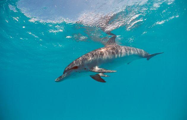 Denunciado por intentar atropellar delfines con su moto acuática en