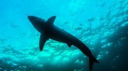 妻を襲ったサメに夫が飛び乗り、パンチし続けて助ける。「誰もがやることをやっただけ」