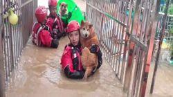 Los bomberos rescatan más de 20 perros atrapados por las inundaciones en