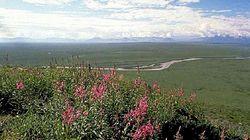 Feu vert pour des forages pétroliers dans la plus grande zone naturelle protégée des