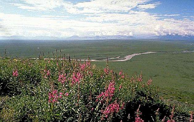 Une vue de la plaine côtière de l'Arctic National Wildlife Refuge en Alaska, aux