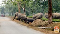The Problem With Environment Ministry's Guide To Check Human-Elephant