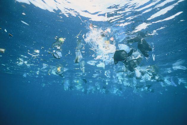 海洋プラスチックごみは生き物に大きな影響を与えている。