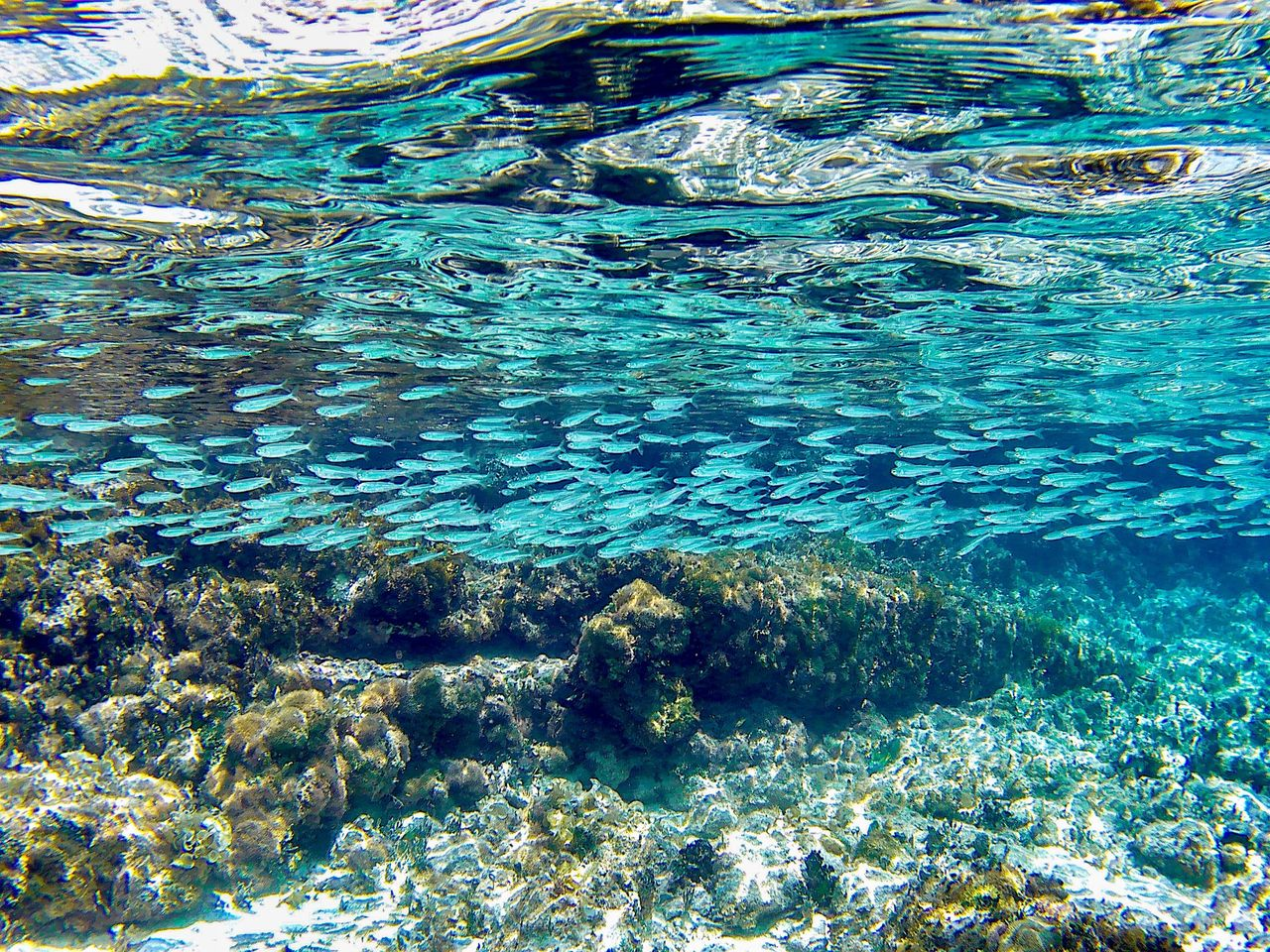 The Mesoamerican Reef, the second-largest coral reef in the world, provides habitat for over 500 species of fish.