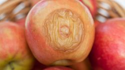 Por qué no es buena idea comerse una manzana cuando empieza a pudrirse (aunque deseches lo