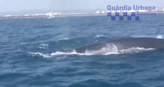 Una familia de ballenas paraliza el tráfico marítimo en