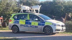 """パトカーに被害を与えたヤギを警察が""""指名手配""""。不発弾を処理している間に……"""