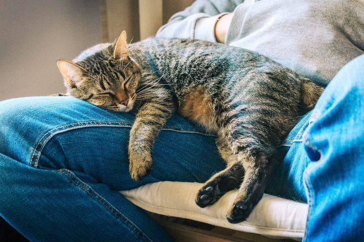 무릎 위에서 낮잠 자는 고양이