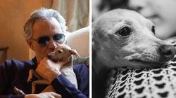 L'addio di Bocelli alla cagnolina Pallina: