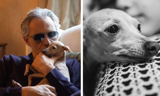 Bocelli e il cane