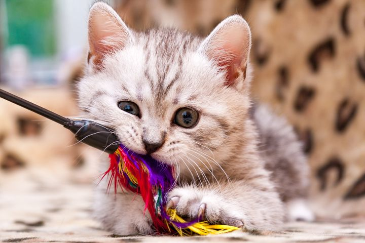 고양이와 놀아주기
