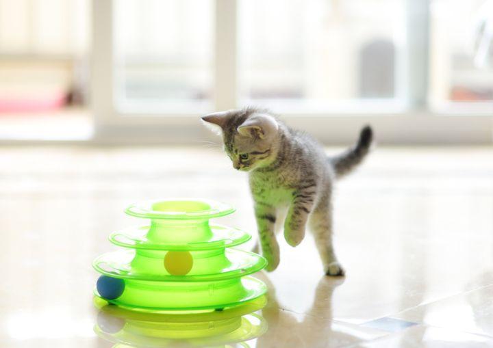 장난감을 갖고 노는 고양이