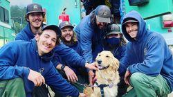 盲導犬になれなかった犬、山火事で疲弊する消防士たちを癒やす(モフモフ写真・動画集)