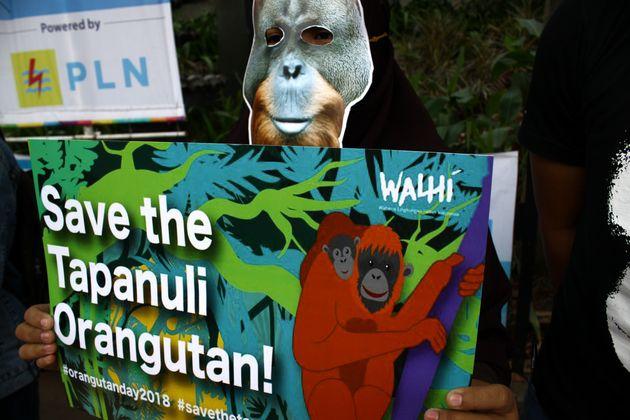 2018년 8월 '오랑우탄의 날'을 맞아 한 환경운동가가 인도네시아 자카르타에서 '오랑우탄을 지키라'는 구호가 적힌 플래카드를 들고 시위하고
