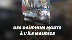 Une vingtaine de dauphins retrouvés morts à l'Île