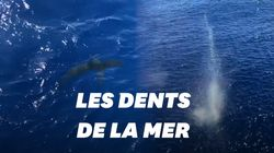 Un garde-côte américain tire sur un requin s'approchant de