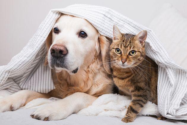 まだまだ暑い!犬・猫の熱中症対策は大丈夫?「ペット用冷感ひんやりマット」7選