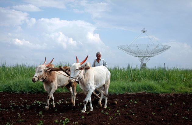 A farmer uses his oxen to till his land in front of a satellite dish set up in an adjacent field in Narayangaon...