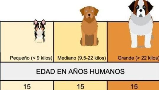 Cuál es la equivalencia entre la edad de un perro y la edad