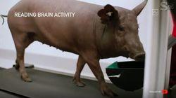 Elon Musk mostra come funziona l'impianto cerebrale Neuralink inserito in un maiale