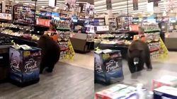 Un oso se cuela en un supermercado del norte de