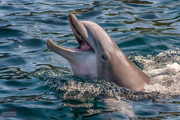 COVID-19 en animales: ¿Son los delfines más vulnerables que los