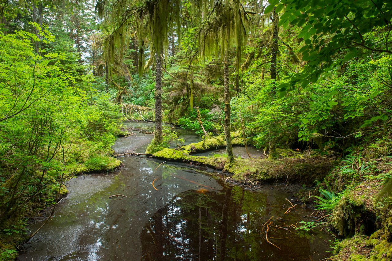 Takatz Bay on Baranof Island in the Tongass National Forest in Alaska has long been protected from road building and logging. The Trump administration is set to strip back these rules and open the pristine forest to industry.