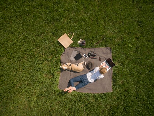 Woman lying on blanket on meadow with dog using laptop