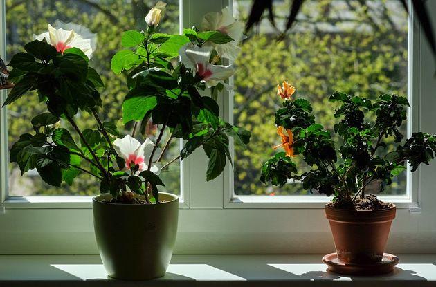家の外にある植木鉢は前もって室内に移動させておきましょう