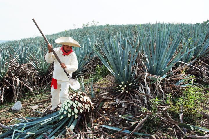 What Most Americans Don't Know (But Should) About Tequila