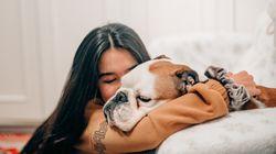 Comment bien vivre le deuil de nos animaux de