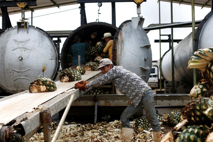 Workers loads blue agave hearts into an oven for distillation to make tequila at a factory in Amatitán, Jalisco, Mexico on Sept. 7, 2017.