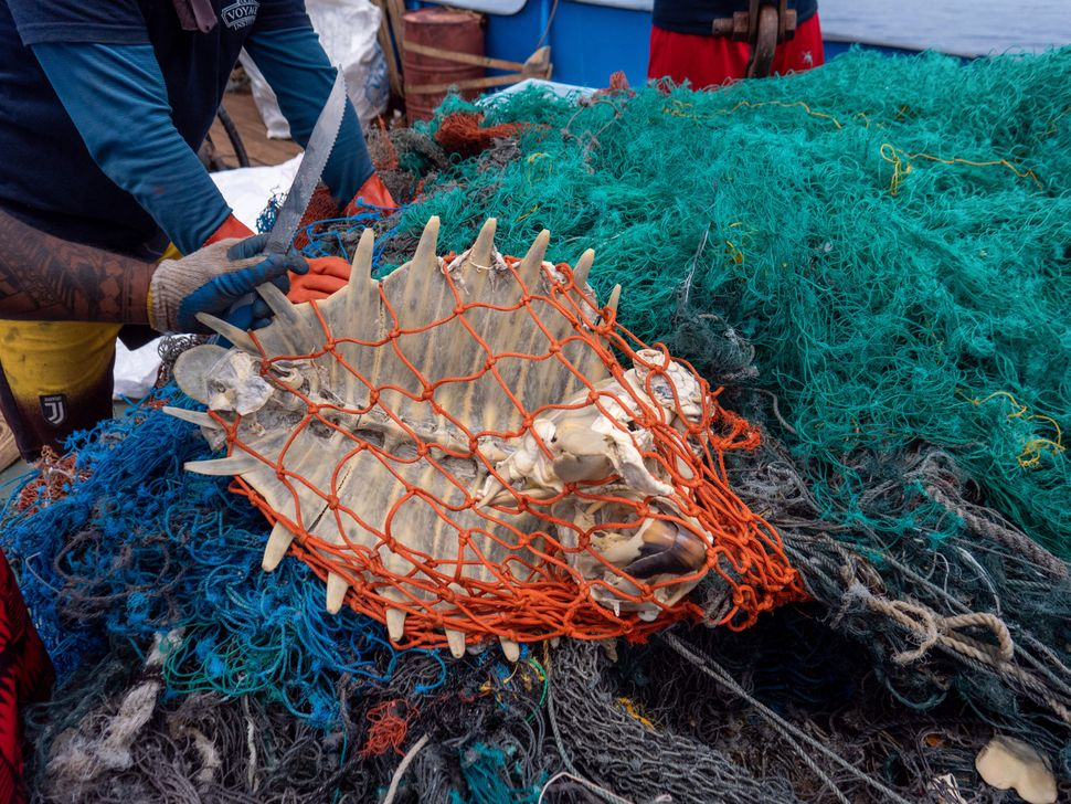 Nearly half of the waste is discarded fishing gear, in which marine animals (like turtles in the photo) can become fatally en