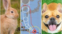 台風10号の国際名称は「ハイシェン」