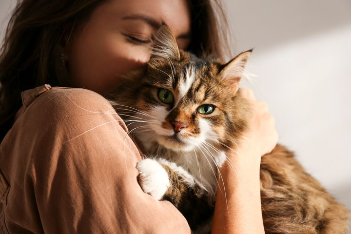 These Are 5 Different Types Of Cat Owner. Which One Are You? | HuffPost UK  Life