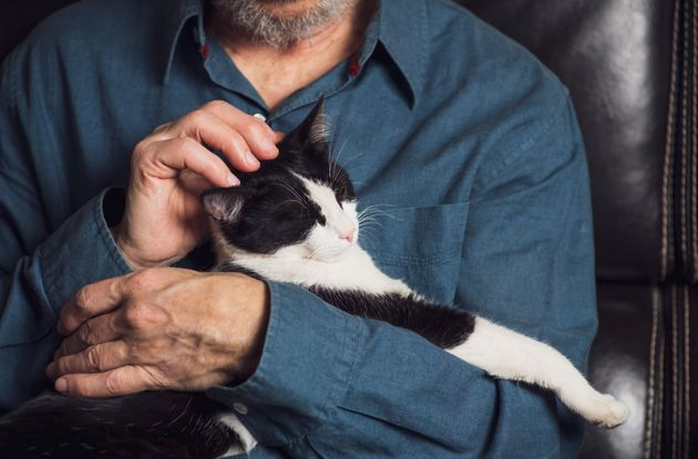 Senior man petting his cat on a sofa at home