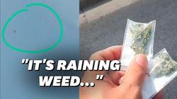 Du cannabis tombé du ciel en