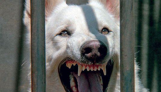 'Cão Branco': A incompreendida alegoria antirracista que acabou com a carreira de um grande