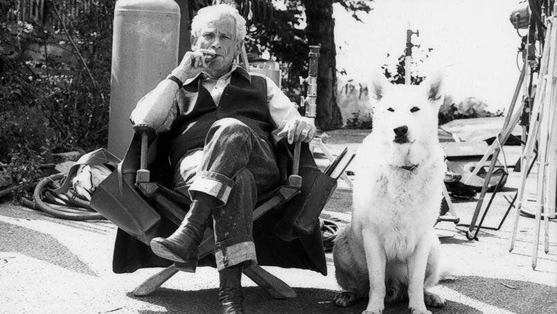 O cineasta Samuel Fuller no set de filmagem com um dos cinco cães que