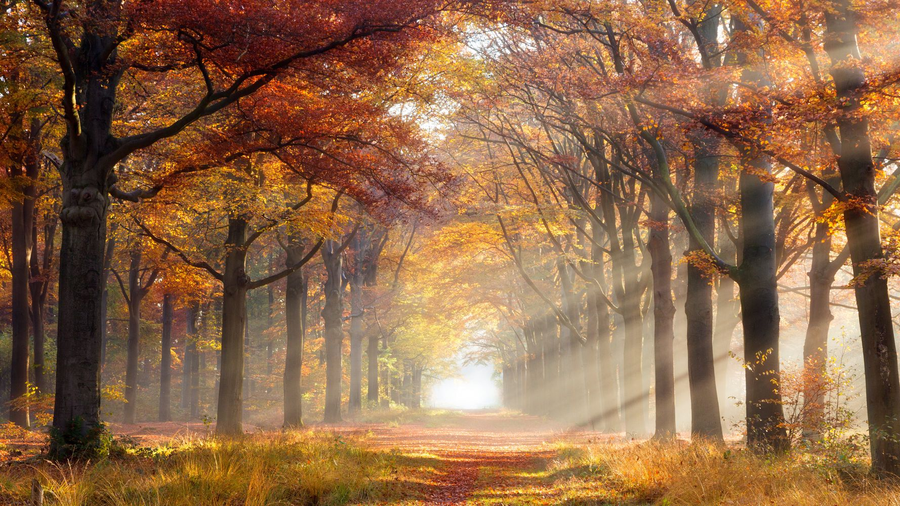 Why You Should Embrace Autumn, Even If You're Feeling A Little Wobbly