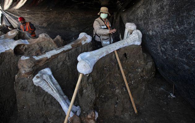 Μεξικό: Σκελετοί από 200 μαμούθ βρέθηκαν σε υπό κατασκευή