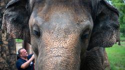 「世界で最も孤独なゾウ」が新天地へ。35年飼育された動物園からの移送が決まる